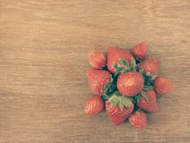 Erdbeerblume Stockbilder