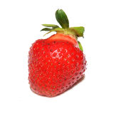 Erdbeere Lizenzfreie Stockbilder
