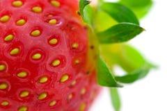 Erdbeere Stockbilder