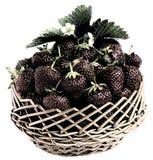 Erdbeere Stockfoto