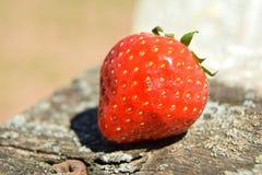 Erdbeere auf altem Holz Lizenzfreie Stockbilder