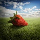 Erdbeere auf dem Feld Stockbilder