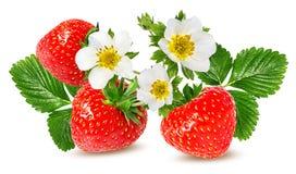 Erdbeere auf Weiß stockfoto