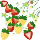 Erdbeere auf weißem Hintergrund, Illustration Lizenzfreies Stockbild