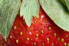 Erdbeere-Blätter Stockfotos