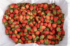Erdbeere, DA-Lat, dalat, Frucht, Landwirtschaft Stockfotos