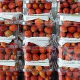 Erdbeere, DA-Lat, dalat, Frucht, Landwirtschaft Lizenzfreies Stockbild