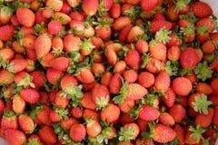 Erdbeere, DA-Lat, dalat, Frucht, Landwirtschaft Lizenzfreie Stockfotografie