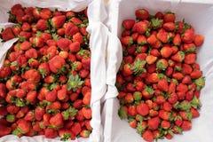 Erdbeere, DA-Lat, dalat, Frucht, Landwirtschaft Stockfoto