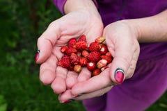 Erdbeere in den Händen Lizenzfreies Stockfoto