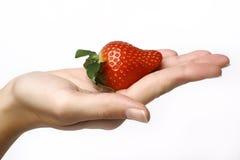 Erdbeere in der Hand stockfotos