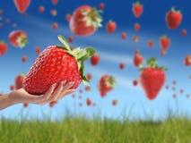 Erdbeere in der Hand Stockbilder