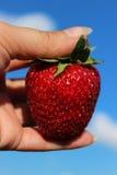 Erdbeere in der Hand auf Himmelhintergrund Saftige reife Erdbeere Stockfoto