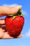 Erdbeere in der Hand auf Himmelhintergrund Saftige reife Erdbeere Stockbilder