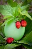 Erdbeere in der hellen Eierschale   Lizenzfreie Stockfotos
