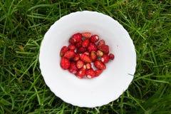 Erdbeere in der Schüssel Lizenzfreie Stockbilder