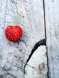 Erdbeere des Sommers Stockfoto