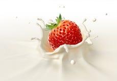 Erdbeere, die in das Milchspritzen fällt Stockbild