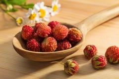 Erdbeere in einem hölzernen Löffel Stockbilder