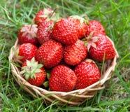 Erdbeere in einem Korb Stockfoto