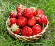 Erdbeere in einem Korb Lizenzfreies Stockbild