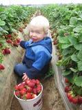 Erdbeere fields2 Lizenzfreie Stockbilder