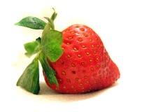 Erdbeere getrennt auf Weiß lizenzfreies stockfoto