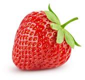 Erdbeere getrennt auf Weiß stockbilder