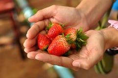 Erdbeere an Hand Stockfotos