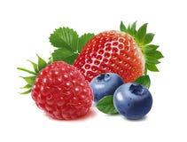 Erdbeere, Himbeere und Blaubeere lokalisiert auf weißem Hintergrund lizenzfreies stockbild