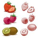 Erdbeere, Himbeere und Kiwi lizenzfreie abbildung