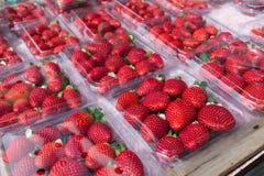 Erdbeere im Satz Stockfotografie