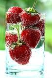 Erdbeere im Wasser Stockbilder