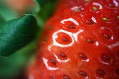 Erdbeere-Makro Lizenzfreie Stockfotos