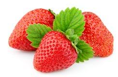 Erdbeere mit dem Leben Stockbilder