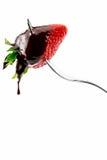 Erdbeere mit flüssiger Schokolade Stockfotografie