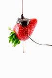 Erdbeere mit flüssiger Schokolade Stockfoto