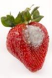 Erdbeere mit Formpilz Lizenzfreie Stockfotografie