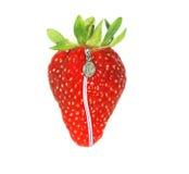 Erdbeere mit Reißverschluss Lizenzfreie Stockbilder