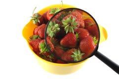 Erdbeere mit Vergrößerungsglas Lizenzfreie Stockfotos