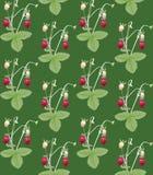 Erdbeere Nahtloses Muster Stockfotos