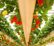 Erdbeere - sie ist geschmackvoll! Stockbild