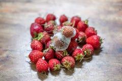 Erdbeere sind auf reifer Stapelerdbeere pilzartig lizenzfreie stockfotografie