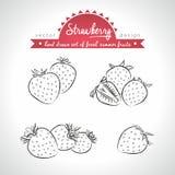 Erdbeere Stellen Sie von den frischen Früchten ein, ganz, halb und mit Blatt gebissen Auch im corel abgehobenen Betrag Getrennt a lizenzfreie abbildung