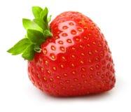 Erdbeere trennte Lizenzfreie Stockbilder