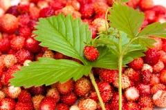 Erdbeere und Blatt auf Erdbeerhintergrund Lizenzfreie Stockfotos