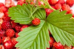 Erdbeere und Blatt auf Erdbeerhintergrund Lizenzfreie Stockbilder