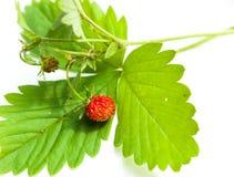Erdbeere und Blatt auf weißem Hintergrund Stockbild
