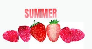 Erdbeere und Himbeere auf einem weißen Hintergrund stock abbildung
