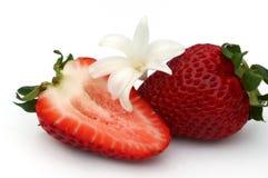 Erdbeere und weiße Blume Stockbilder